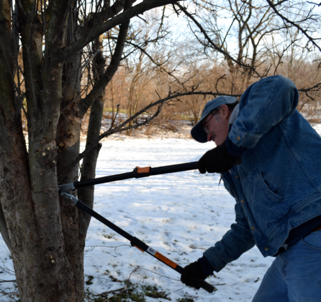 This is how we began the year and this blog on January 1, 2013: pruning the apple trees.