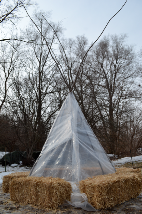 Our tipi greenhouse.